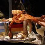 Mondiali, Paul emette il suo verdetto: la Germania vince contro l'Argentina!