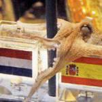 Curiosità, Mondiali 2010, è morto il polpo Paul!